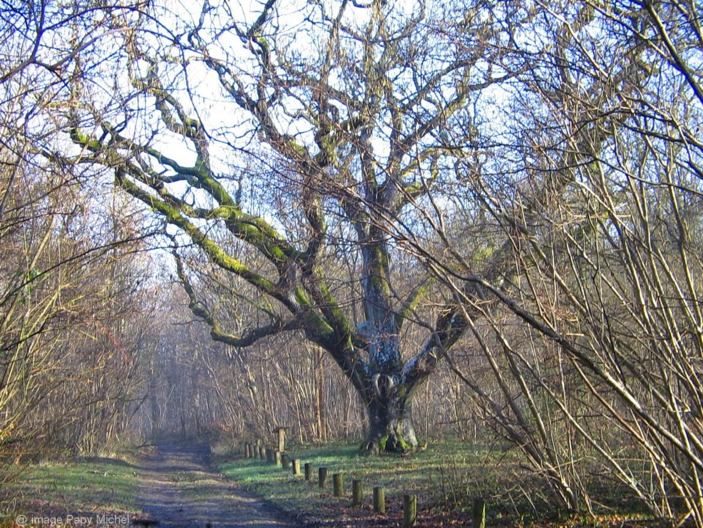 image de la forêt de Rosny-Sur-Seine